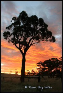Rural New South Wales, Australia and their stunning sunsets - one New Year's eve.