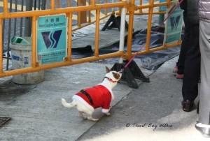 Probably doesn't like his Santa coat?