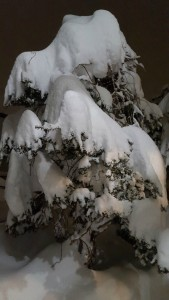 Heavy snow falls!