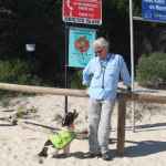 Moreton Island is cane toad free – how come?