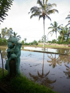 Sharing Bali surrounded by rice paddies