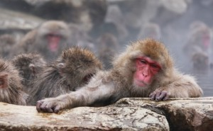 snow monkey taking a moment
