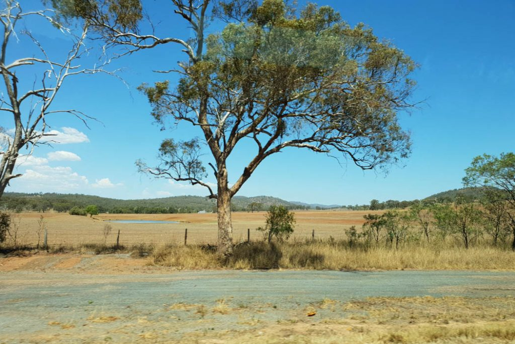 Image of a landscape taken during the day showing blue sky with a gum tree in the forefront open plains and mountains in the distance
