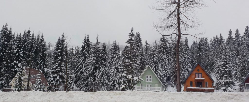 Two A-framed shaped houses one brown one green are in front a forest of evergreen trees covered in snow