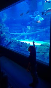 Man stands in front of a large fishtank he is pointing to the fish