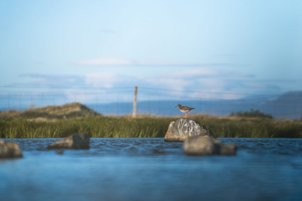 Small bird stands on a rock in the water