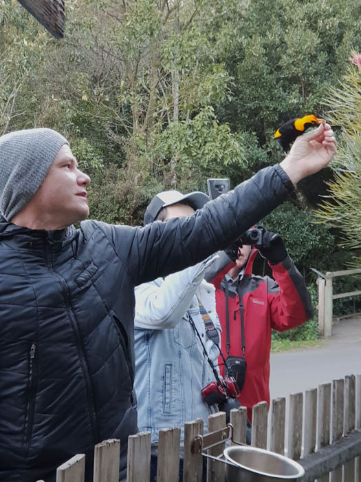 Image of a man waering a beanie and grey puffer jacket holding a small piece of food out to a yellow and black bird