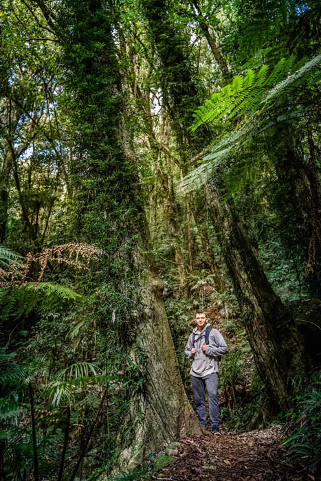 A young man wearing a gray sweatshirt and long pants looks up into the trees surrounded by rainforest