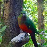 Image of a parrot with red breast and green wings pereched on a tree branch