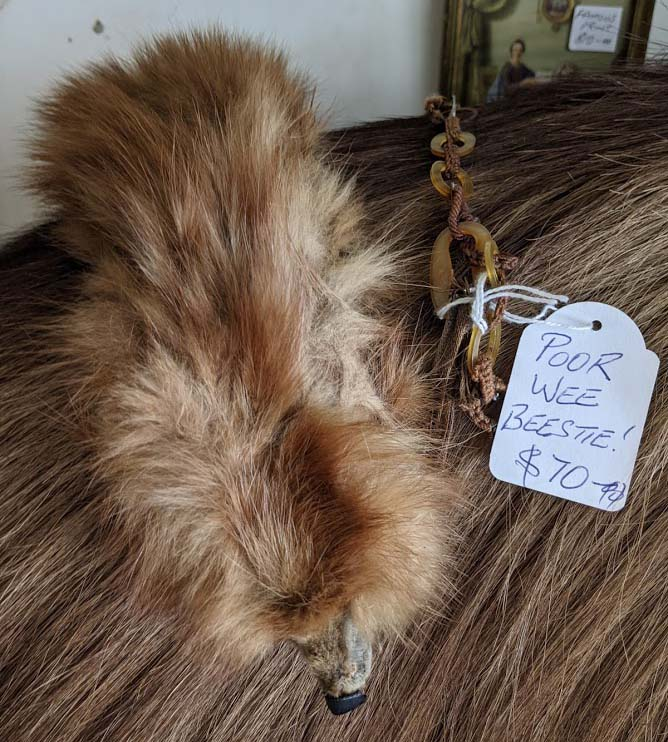 Image of a taxidermied animal with a white price tag atatched that says Poor wee beestie $70
